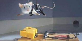 Cái bẫy chuột và bài học cuộc sống